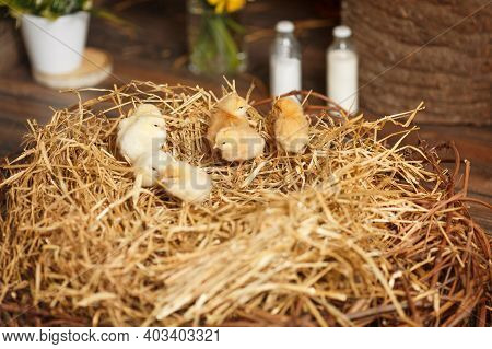 Close-up Of A Lot Of Small Yellow Chicks. Happy Easter. Easter Baby Chickens In The Straw Nest On Th