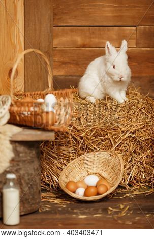 Easter Cute Bunny Sitting With Basket Of White Eggs On Background Of Rural Scene. Baby White Little