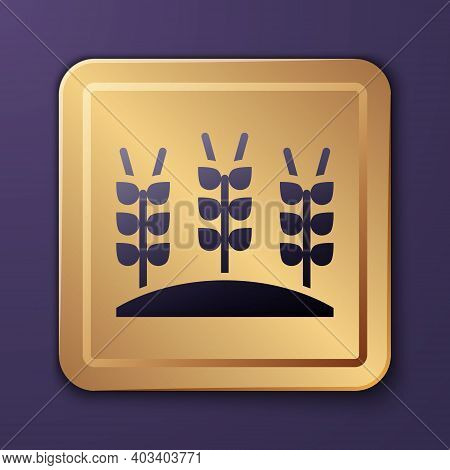 Purple Cereals Set With Rice, Wheat, Corn, Oats, Rye, Barley Icon Isolated On Purple Background. Ear