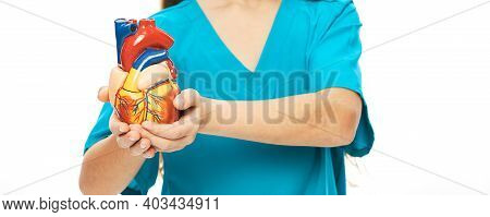 Child Holding An Anatomical Heart Model In Front Of Him To Study Human Anatomy. School Education And