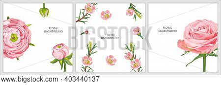 Floral Background With Pink Rose, Ranunculus Flowers, Chamelaucium Isolated On A White Background.