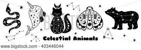 Celestial Animals Set. Big Bear Shape Moth, Cat, Whale, Snake. Starry Elements Isolated. Black Shape