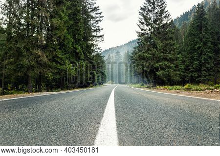 Empty Rural Highway Alpine Mountan Road At High Coniferous Pine Tree Bottom Pov. Scenic Abstract For