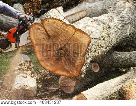 Close Up Of Chainsaw Cutting Up Large Tree Trunk After Storm With Saw Dust Flying And Using Selectiv