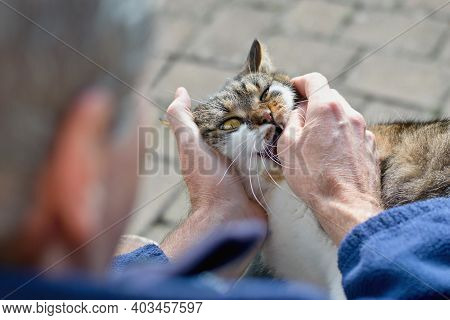 Aggressive Cat Bitting Man Into His Hand