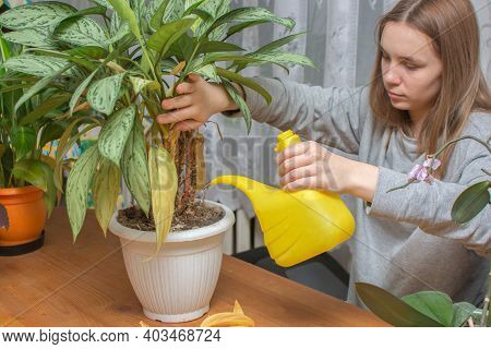 A Teenage Girl Watering Indoor Flowers From A Yellow Watering Can. Horizontal Photo. The Idea Is To