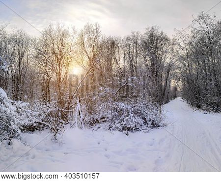 Winter Landscape Panorama Of Snow And Sun . The Sun Peeks Out From Behind The Trees. Nature. Snow Va