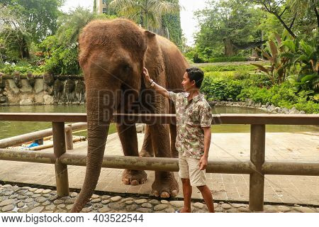 A Man Looking A Female Asian Elephant In The Eye While He Strokes Her Trunk And She Holds A Piece Of