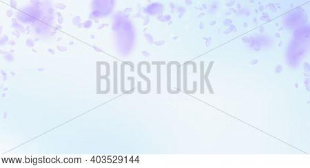 Violet Flower Petals Falling Down. Pleasing Romantic Flowers Falling Rain. Flying Petal On Blue Sky