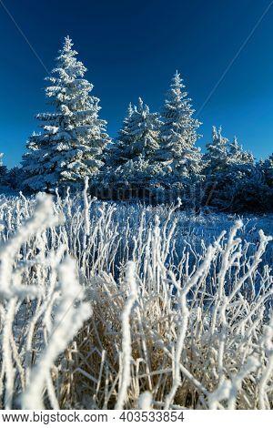 Winter landscape near Velka Destna, Orlicke mountains, Eastern Bohemia, Czech Republic