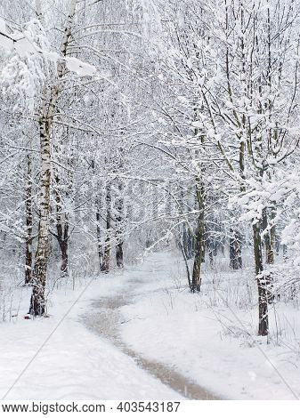 Beautiful Winter Scene With Snow Covered Trees And Footpath In The Snow Through The Forest.