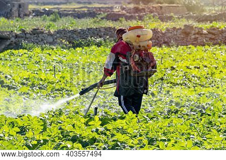 Farmer With Manual Electric Fogger Machine Spraying Pesticides And Herbicides In Potato Field