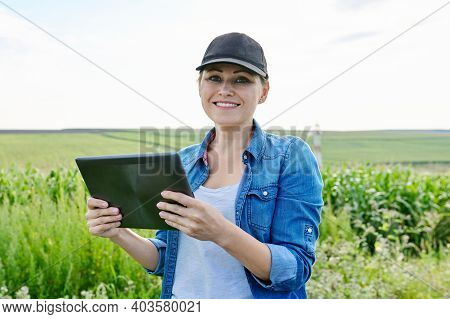 Agriculture Farming, Woman Agronomist Farmer Working With Digital Tablet In Corn Field, Analyzes The