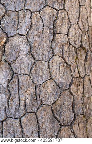 Tree Bark On Seven Bridges Trail In Fairfield Glade Tn