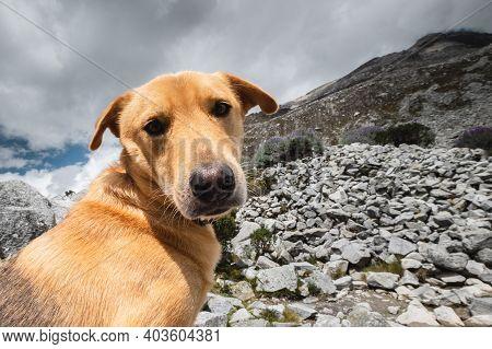 Goofy Dog Face On A Rocky Background.