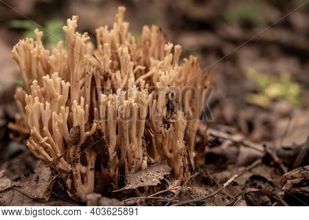 Group Of Fungus Grow From Forest Floor In Great Smoky Mountains National Park