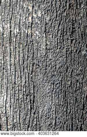 Texture Of The Surface Of An Old Wooden Board Located In The Open Air For Many Years