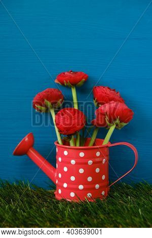 Red Ranunculus Flowers. Buttercups Bouquet. Floriculture And Horticulture Concept. Red Ranunculus In