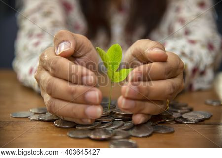 Saving Money Concept For Business, Financial And Investment. Plant Is Growing In A Jar With Coins.