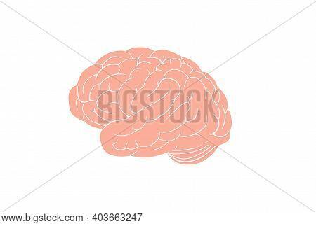 Anatomical Brain. Large Pink Gyrus Encircle Entire