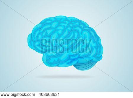 Anatomical Blue Brain. Large Gyrus Encircle Entire