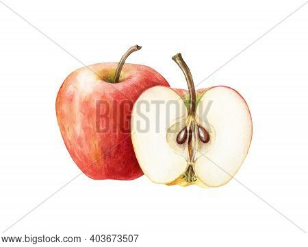 Red Apple And Half Fruit Watercolor Illustration. Realistic Sweet Juicy Organic Food. Fresh Sliced R