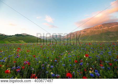 Wild Flowers Landscape At Sunset In Castelluccio Di Norcia, Umbria, Italy. High Quality Photo