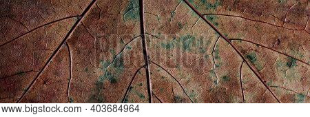 Dry Autumn Leaf Close-up. Textured Surface Of A Maple Leaf Macro.