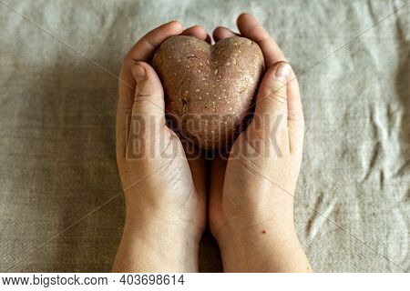Female Hands Holding Ugly Vegetables Potatoes In The Shape Of A Heart On A Background Of Linen Cloth