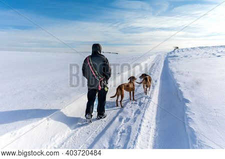 Man Hikers With Dog On Trekking In Winter Landscape. Walk The Dogs. Active Lifestyle. Winter Landsca