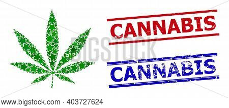 Cannabis Star Mosaic And Grunge Cannabis Seal Stamps. Red And Blue Watermarks With Scratched Texture