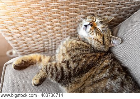 Cute Little Lazy Tired Tabby Cat Relaxing Enjoy Lying, Napping And Dreaming On Cozy Outdoor Wicker A