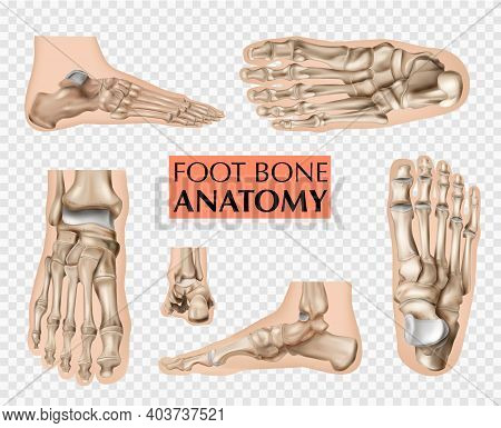 Realistic Foot Bones Anatomy Silhouettes Set Of Isolated Footstep Images And Editable Text On Transp