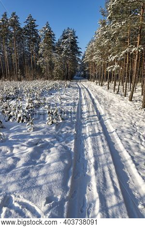 Snow-covered Road Leading Through The Forest. Snow On Tree Branches In Central Europe.