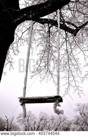 A Swing Hanging From A Tree Branch Is Covered With Hoar Frost In The Foggy Wintry Season.