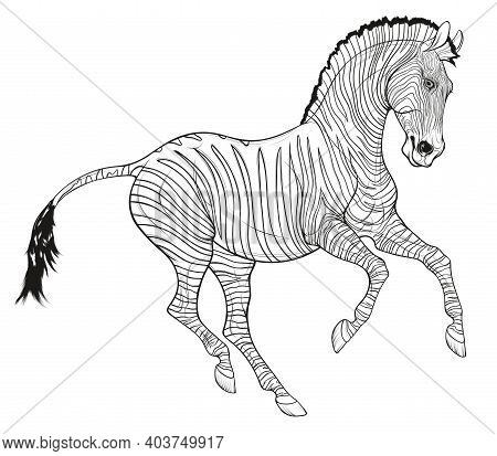 Galloping Plains Zebra Pricked Up Its Ears And Looks With Interest. Color Illustration Of A Striped