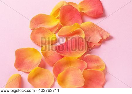Gentle Blurred Background Of Rose Petals On A Pink Background. Card With Flower Petals