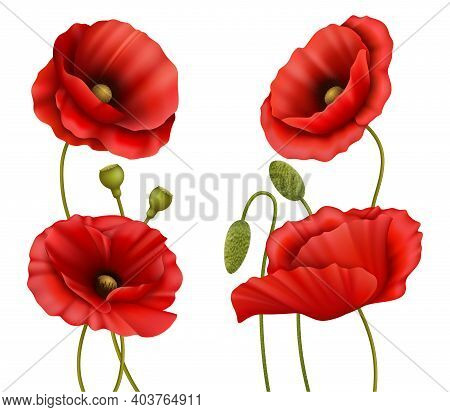 Realistic Detailed 3d Red Poppies Set Summer Or Spring Elements. Vector Illustration Of Bloom Poppy