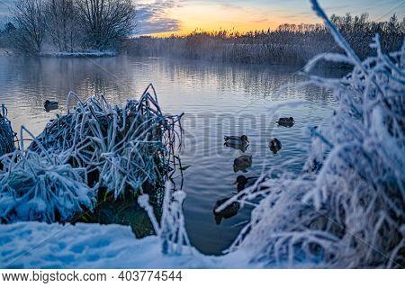 Sunrise Over Water And Ducks In Kumla Park Sweden