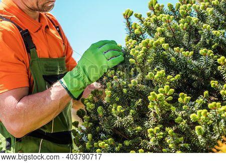 Professional Caucasian Gardener Checking Garden Plants Health During Seasonal Check Up.