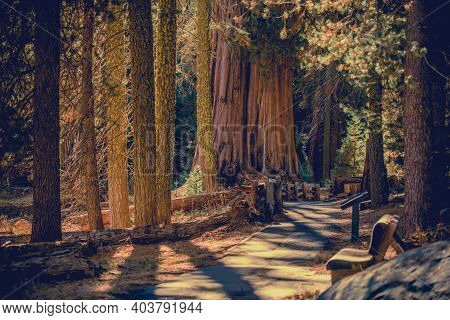 World Famous California Sequoia National Park Scenic Pathway Trail In The Sierra Nevada Mountains. S