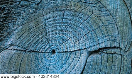 Cracked Bough On An Old Dried Weathered Wooden Board Close-up. Dark Blue Tinted Natural Background O