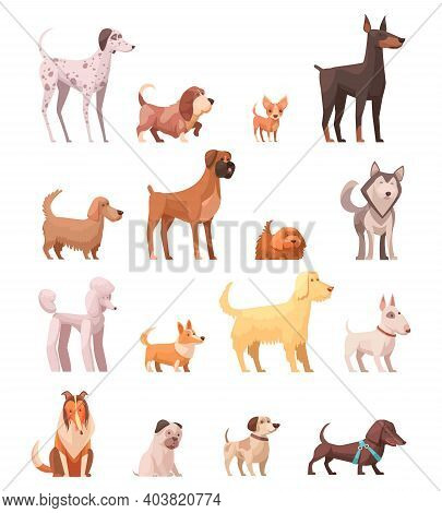 Dog Breeds Retro Cartoon Icons Collection With Husky Poedel Collie Shepherd And Dachshund Dog Isolat