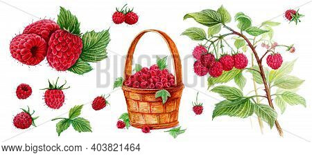 Raspberry In A Basket, Raspberry With A Leaf, Raspberry On A Branch. Set Of Watercolor Illustrations