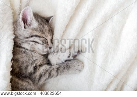 Cute Tabby Kitten Sleeping On White Soft Blanket. Cat Rest Napping On Bed. Comfortable Pet Sleeping