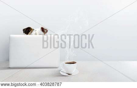 Bulldog Using A Laptop Computer In A White Room With A Hot Cup Of Coffee. Funny Online Class Or Work