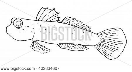 Japanese Saltwater Fish Vector Illust Set.hand-drawn Fish In Sketch Style Isolated Element Black Out