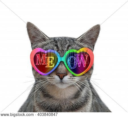 A Gray Cat Wears Color Heart Shaped Sunglasses With The Inscription