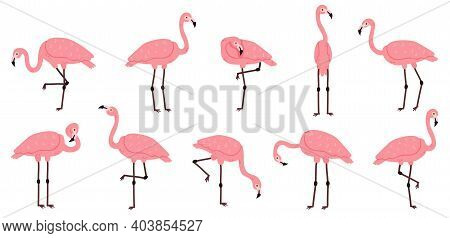 Pink Flamingo. Exotic Flamingos Birds, Rose Feathers African Animal Characters Vector Illustration S