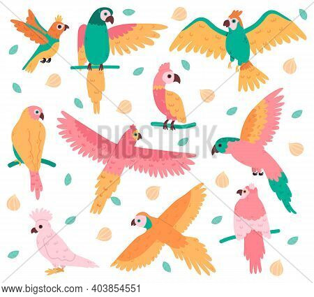 Tropical Parrots. Jungle Colorful Birds, Cute Cockatoo, Jaco And Budgerigar. Summer Tropical Parrots
